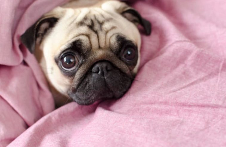 The Top 10 Cutest Dog Breeds In The World Animalaxy